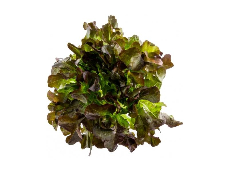 Salát dubový červený čerstvý (180g+) 1ks