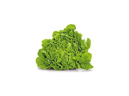 Salát dubový zelený čerstvý (200g+) 1ks