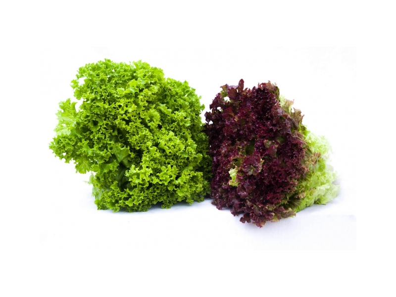 Salát listový Lollo Rosso čerstvý (160g+) 1ks