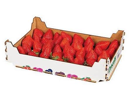 Jahody čerstvé karton 1kg