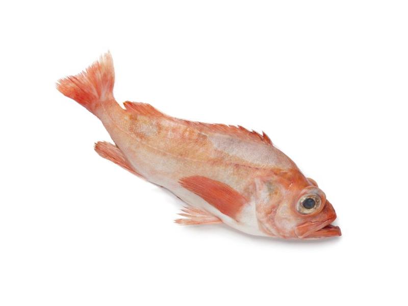Okouník mořský celý kuchaný cca 500g