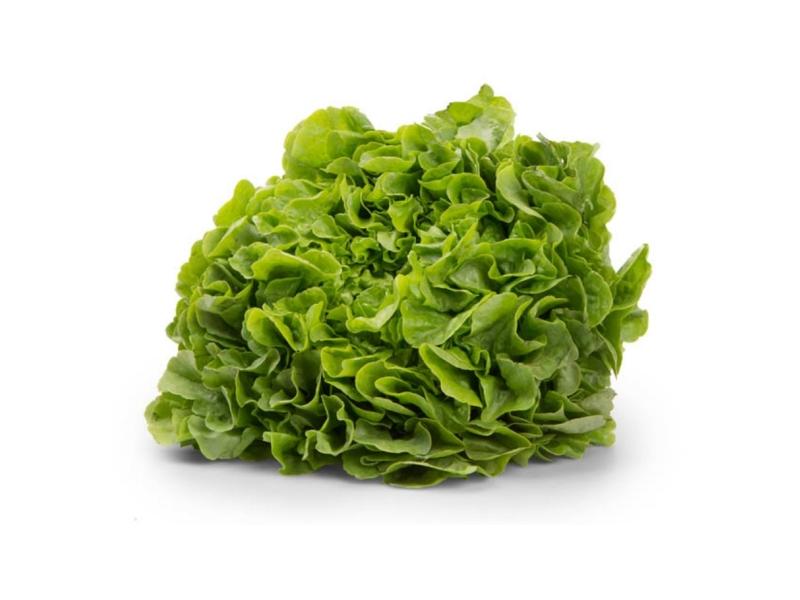 Český salát dubový zelený (150g+)