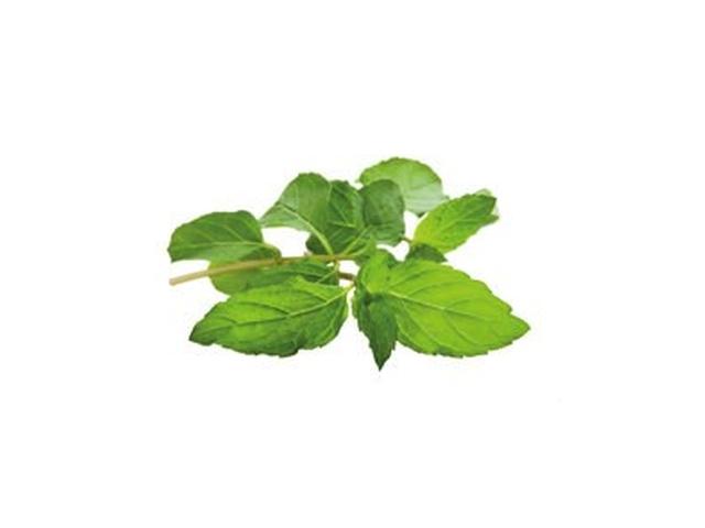 Máta zelená čerstvá 50g, vanička